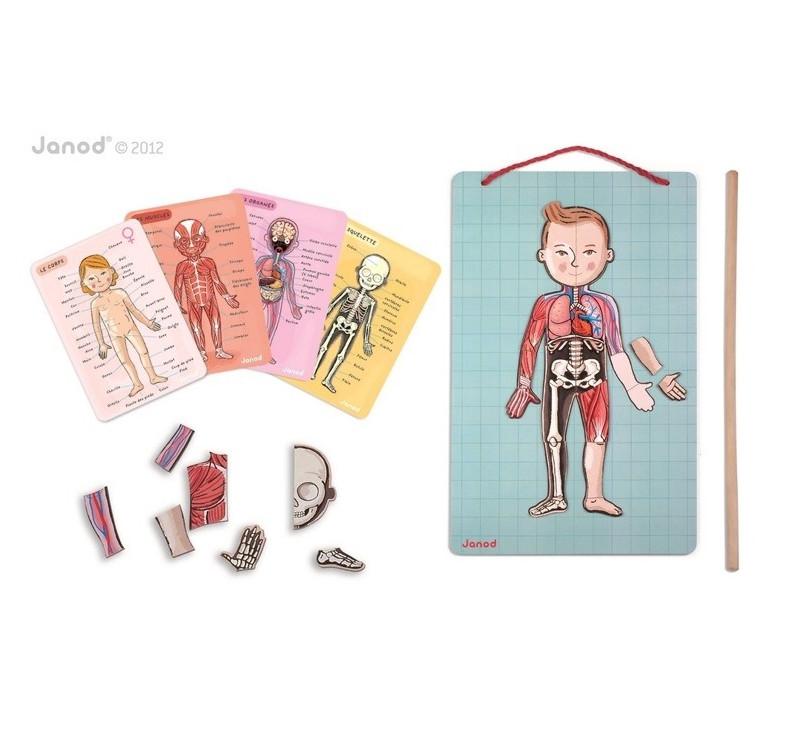 Układanka magnetyczna Ciało człowieka - Janod